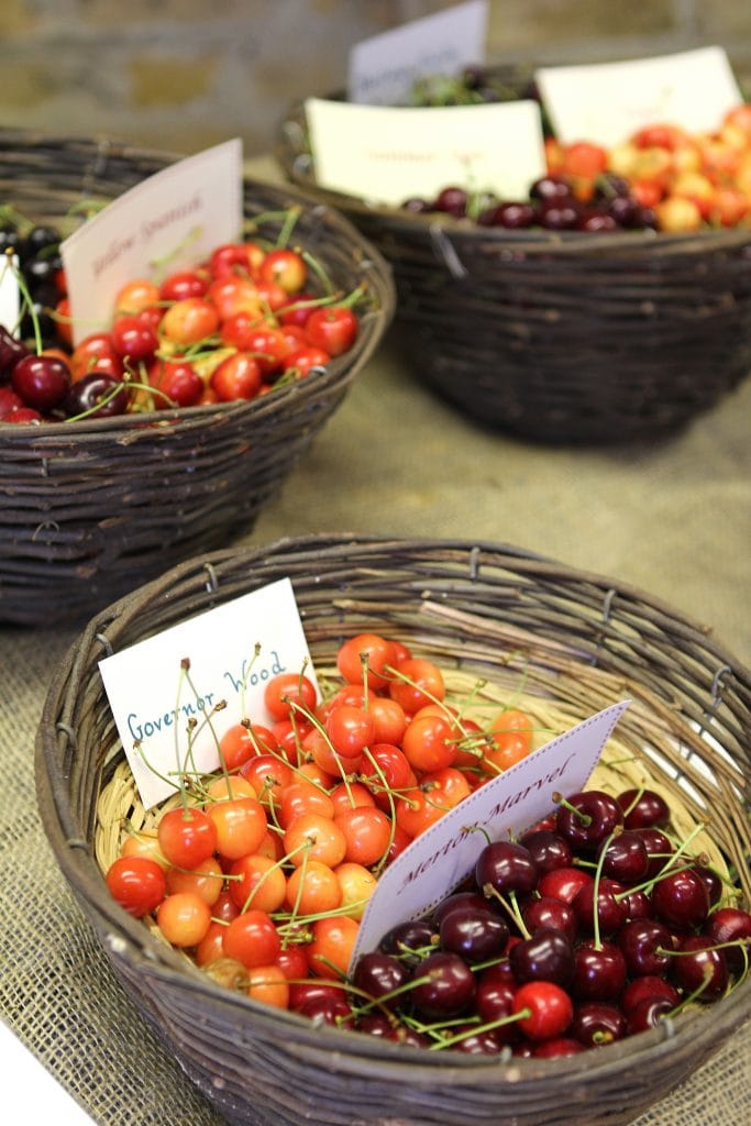 cherries-festival