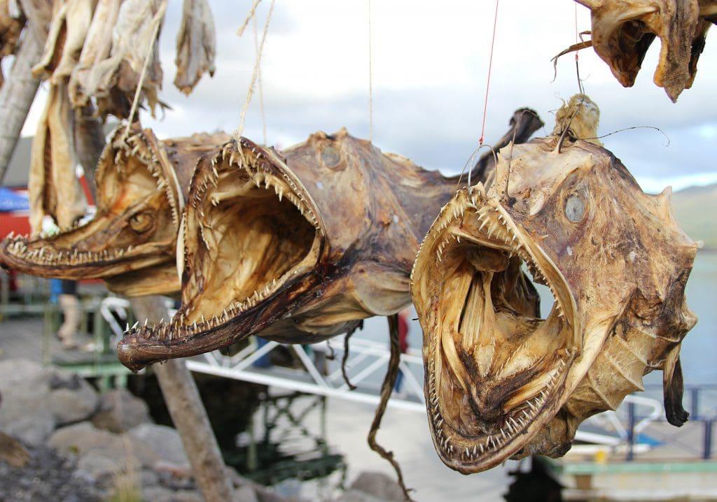 lofoten-islands-fish-drying