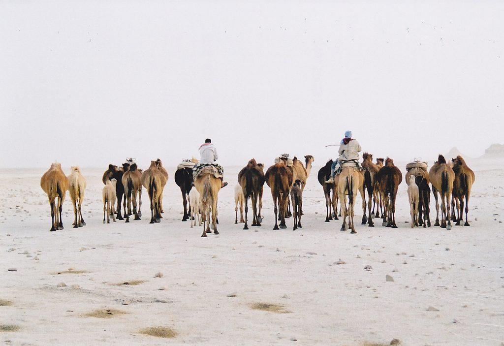 camels-in-sandstorm-love-of-egypt